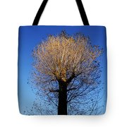 Tree In Afternoon Sunlight Tote Bag