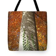 Tree In Autumn Tote Bag