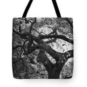 Tree In Prescott Park - Bw Tote Bag