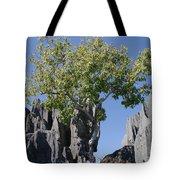 Tree In The Tsingy De Bemaraha Madagascar Tote Bag