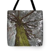Tree In Winter Tote Bag