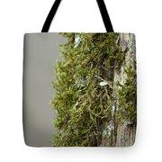 Tree Moss Closeup 2013 Tote Bag