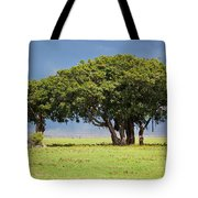 Tree On Savannah. Ngorongoro In Tanzania Tote Bag