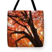 Tree Orange Blast Tote Bag