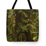 Tree Redwood Ca 7 Tote Bag