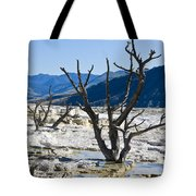 Tree Remains Tote Bag