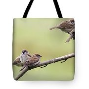 Tree Sparrows Tote Bag