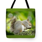 Tree Squirrel Tote Bag