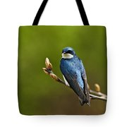 Tree Swallow Pictures 27 Tote Bag