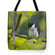 Tree Swallow Pictures 39 Tote Bag