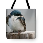 Tree Swallow Pictures 47 Tote Bag