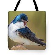 Tree Swallow Squawking Tote Bag