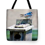 Tree Swallows Tote Bag