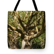 Tree Trunk And Limbs Tote Bag