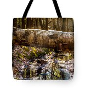 Tree Walk Tote Bag