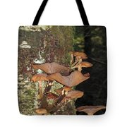 Tree With A Fungus Tote Bag