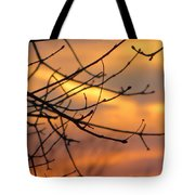 Trees Ablaze In Autumn Tote Bag
