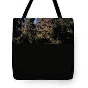 Trees Covered With Monarch Butterflies Tote Bag