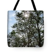 Trees At The Park Tote Bag