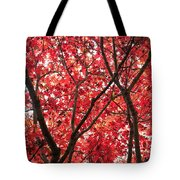 Trees Of Autumn Tote Bag