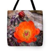 Trichocereus Cactus Flower  Tote Bag