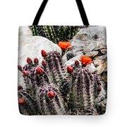Trichocereus Cactus Flowers Tote Bag