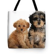 Tricolor Merle Daxie-doodle And Red Toy Tote Bag