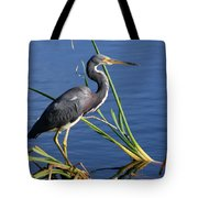 Tricolored Heron At The Pond Tote Bag