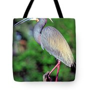 Tricolored Heron In Breeding Plumage Tote Bag