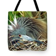 Tricolored Heron Incubating Eggs Tote Bag