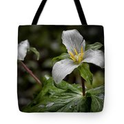 Trillium - After The Rain Tote Bag