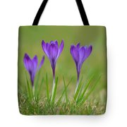 Trio In Violet Tote Bag