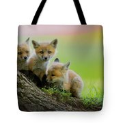 Trio Of Fox Kits Tote Bag by Everet Regal