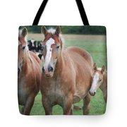 Trio Of Horses 2 Tote Bag