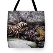 Trio Of Starfish Tote Bag