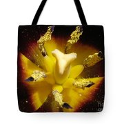 Triumph Tulip Named Gavota Tote Bag