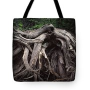 Troots Of A Fallen Tree By Wawa Ontario Tote Bag
