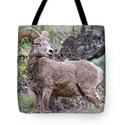 Wild Bighorn Tote Bag