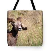 Trophy Bighorn In The Grass Tote Bag