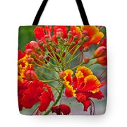 Tropical Flower Caesalpinia Red And Yellow Tote Bag