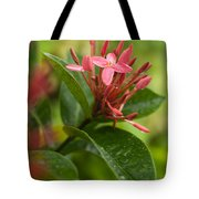 Tropical Flowers In Singapore Tote Bag