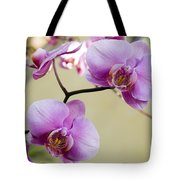 Tropical Radiant Orchid Flowers Tote Bag