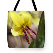 Trout Lily Or Dog-toothed Violet Tote Bag