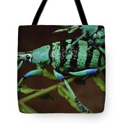 True Weevil Couple Mating Papua New Tote Bag