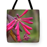 Trumpet Honeysuckle Buds Of Coral Woodbine  Tote Bag