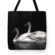 Trumpeter Swan Cygnets Tote Bag