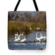 Trunda Swans  Mixed Ducks Tote Bag