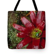 Tufted Airplant And Spanish Moss Tote Bag