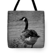 Tufted Tail Feathers Tote Bag