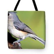 Tufted Titmouse Parus Bicolor Tote Bag